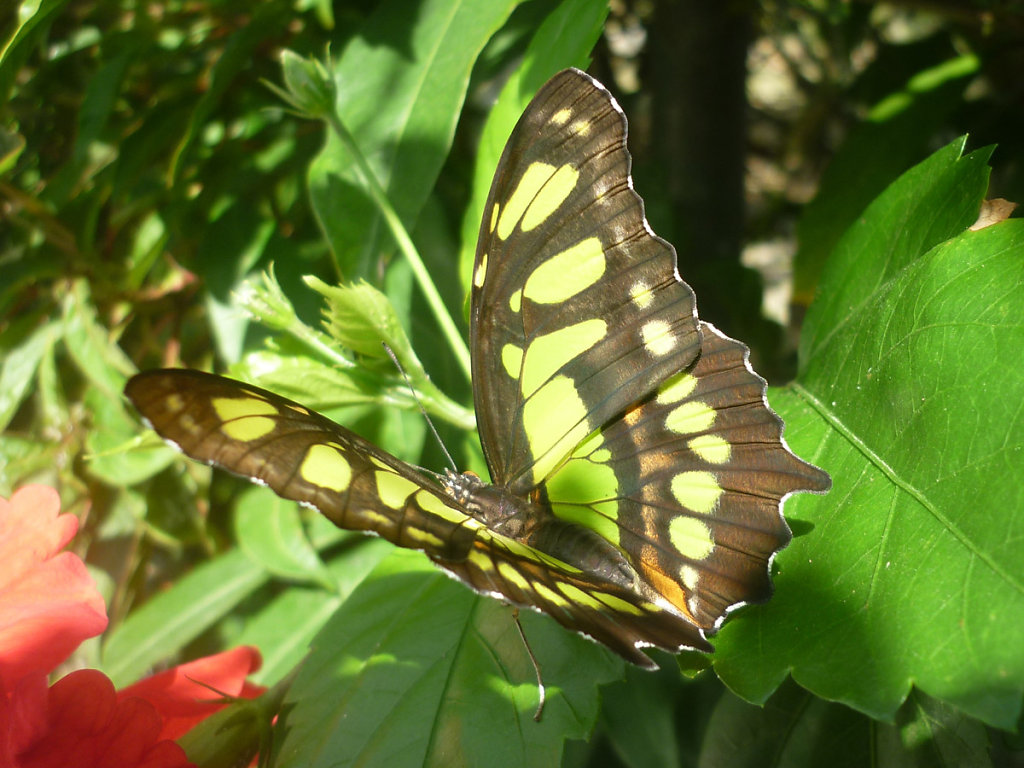 Butterfly in El Valle